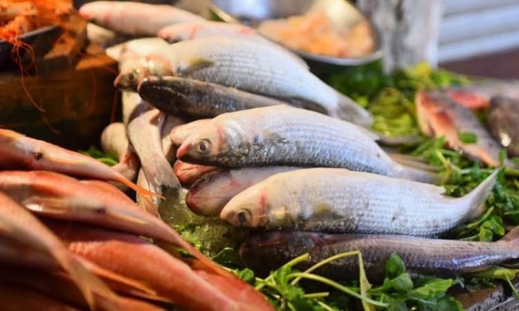 أستاذ بيولوجيا: هناك أسماك سامة منتشرة في الأسواق وتسبب الوفاة مباشرة